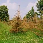 stimmenimwald-sommer